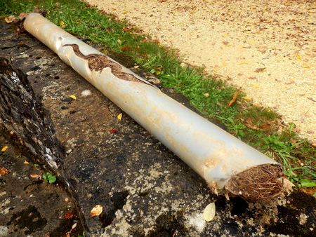 Blocked and split drainage pipe caused by ingress of tree roots