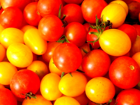 Freshly picked red and yellow cherry tomatoes
