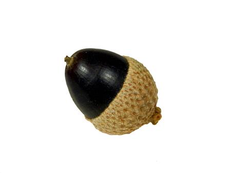 Close up of a black acorn isolated on a white background Reklamní fotografie
