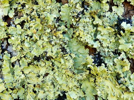 Close up of various types of lichen co-existing on a tree trunk