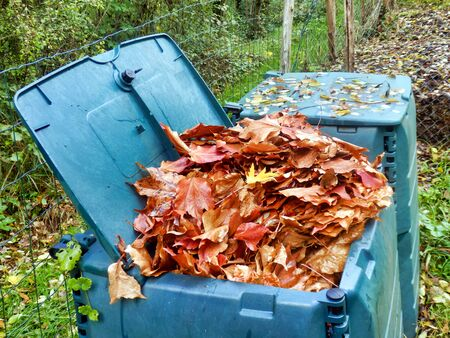 Compost bin full of autumn leaves to provide leaf mulch Stock Photo