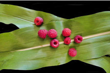 Freshly picked raspberries scattered on green leaves on a black background Stock Photo