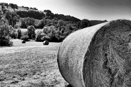 Black and white photo of hay bales freshly rolled in the Dordogne countryside of France Stock Photo