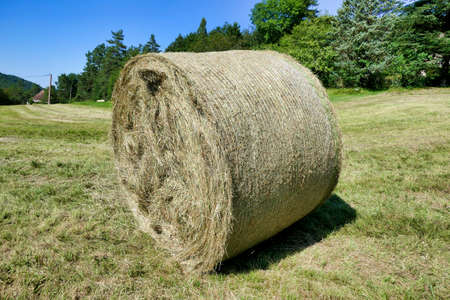 Hay bale freshly rolled in the Dordogne countryside of France Stock Photo