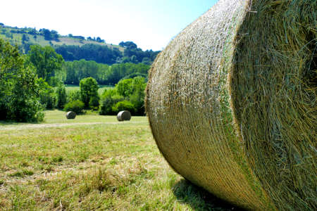 Hay bales freshly rolled in the Dordogne countryside of France