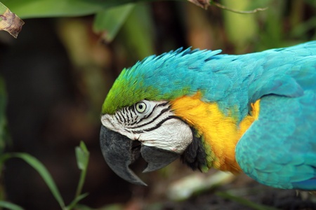 Blue And Yellow Macaw Stock Photo - 9026243