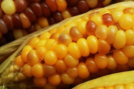 waxy: Boiled corns, healthy vegetable