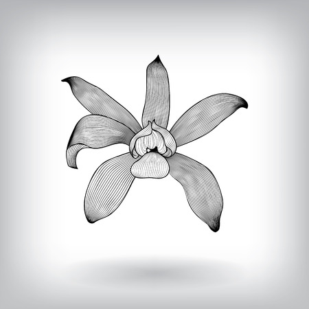 white lilly: Floral Orchid Elements for design, EPS10 Vector background Illustration