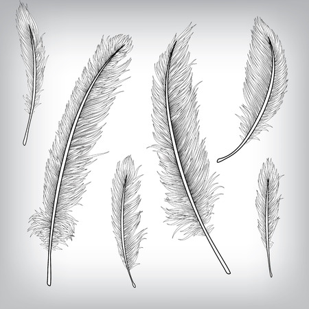 ink sketch: Feather Hand Drawn Background, Vector EPS10