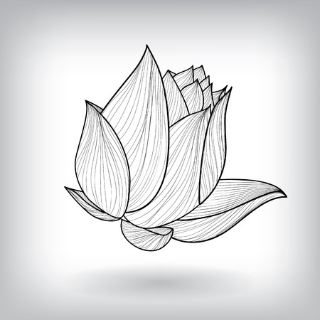 eps10 vector background: Floral Water Lily Elements for design, EPS10 Vector background