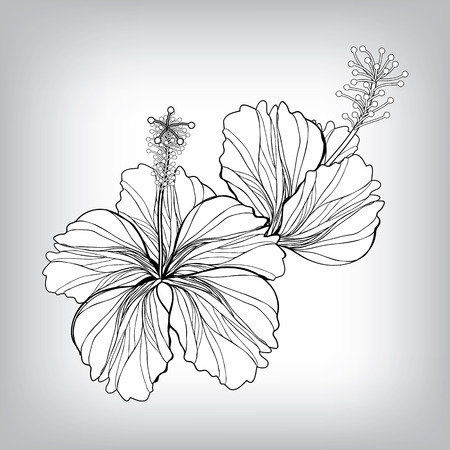 artistic flower: Hibiscus flower drawing. Elements for design, EPS10 Vector background