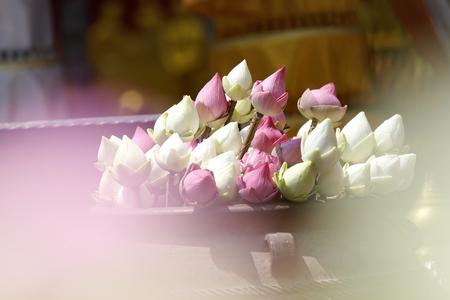 curare teneramente: soft lotus