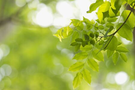 fluctuation: freshgreen, leaf, light, new, plant, processingphotograph, rays, sunlight