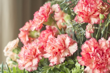 Beautiful carnation flowers or pinks in the flowerbed Stock Photo - 12986547
