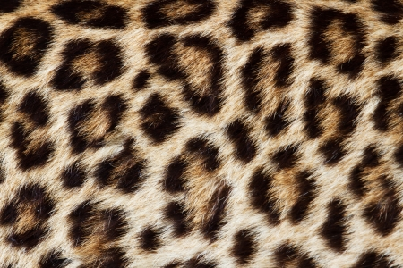 animal fauna: textures of leopath