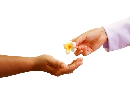 doctor hand giving a flower to patients hand ,giveing a hope  photo