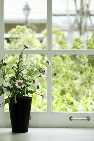 여름 시간에 흰색 복고풍 창틀에 냄비에 신선한 흰 꽃