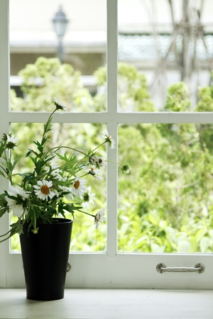 indoor plants: Fresh white flowers in a pot on white retro window sill  in summer time Stock Photo