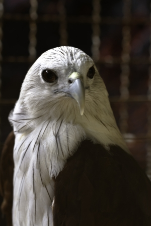 portrait of eagle photo