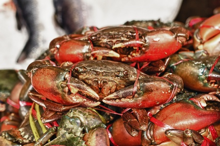 omnivores: fresh crab in the market  Stock Photo
