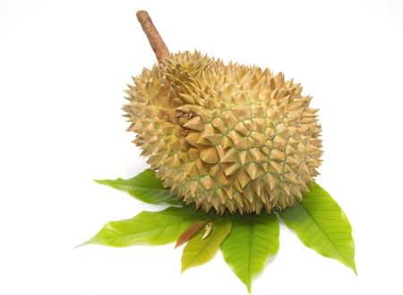 durian ,king of fruits,  thai favorite fruit  on  white background photo