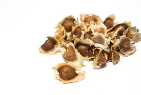 moringa: Moringa Seeds on white background Stock Photo