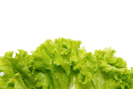 fresh lettuce border on white background photo