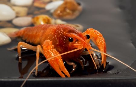 alive crayfish photo