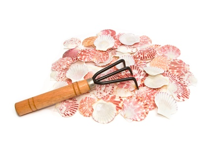 pile of seashell and rake tool on white background Stock Photo - 16951880