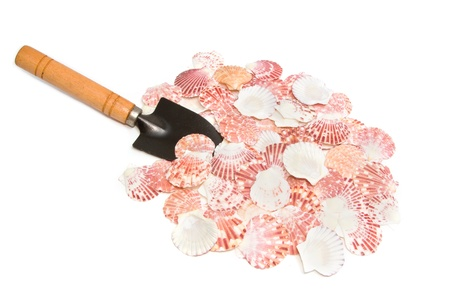 shove: pile of seashell and shove tool on white background Stock Photo