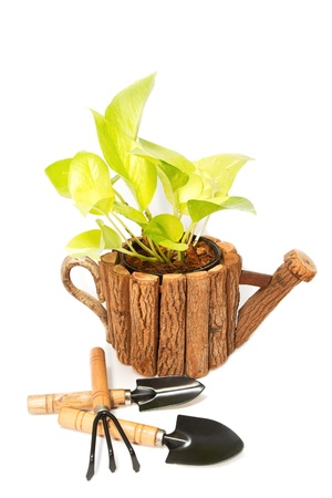 beautiful plant in a flowerpot  and garden tools isolated on white