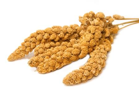 millet: Millet ,bird food on white background