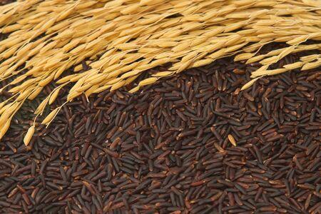 jasmine rice: Negro jazm�n arroz (arroz baya), fondo de alimentos