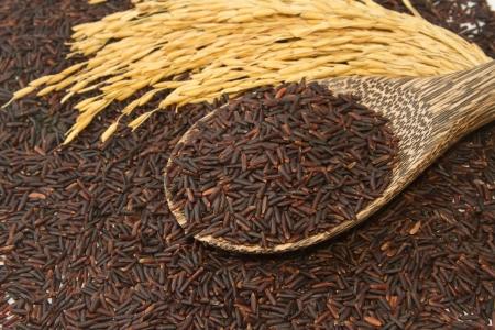 jasmine rice: Tailandesa negro arroz jazm�n (Rice baya) en cuchara de madera
