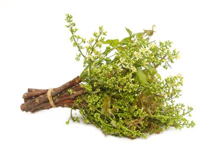 fatty: Neem leaves-Azadirachta indica, Margosa, Quinine (Azadirachta indica A. Juss. Var. Siamensis Valeton)