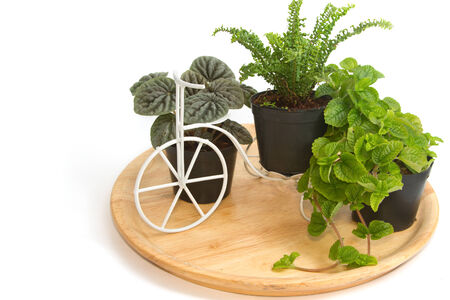 botanica: Group of house plants in a wooden tray  Stock Photo