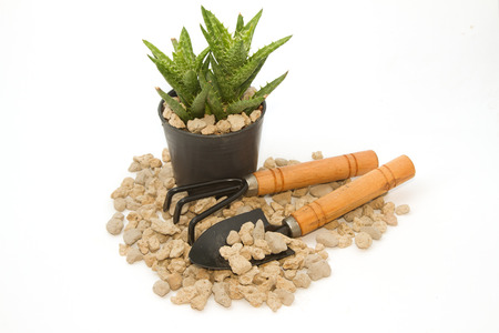 pumice pebbles  in cray pot and gardening tool