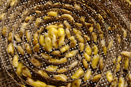 Silk worms nest in bamboo basket photo