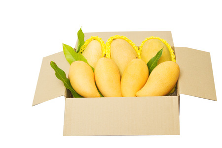 Ripped mangoes in a paper box ready to export  photo