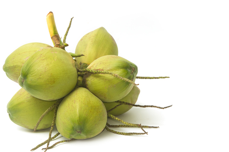 young coconut photo