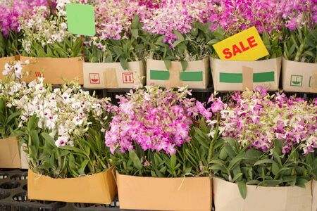 Box of orchid flower are on sale in plant market Thailand photo