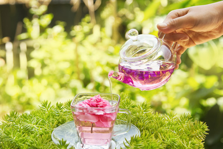 Pouring tea from a teapot into a cup in the garden photo