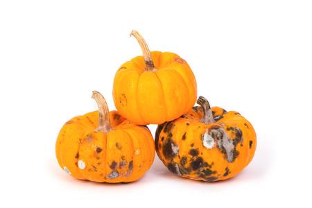 Closeup of  rotten pumpkin photo