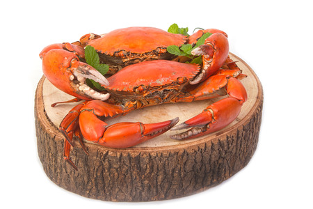 dungeness: Cooked whole dungeness crab