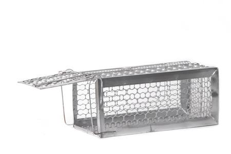 rata: Mousetrap (jaula de ratas) aisladas sobre fondo blanco