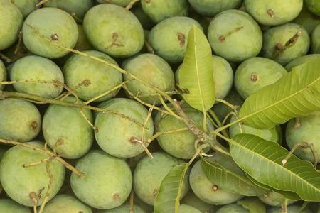 mango fruta: Fruta de mango verde