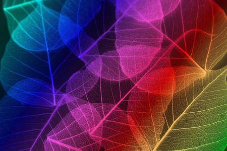 hojas de colores: Hojas de colores sin fisuras en el fondo blanco. Foto de archivo