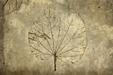 fossilized: leaf print on concrete texture and background