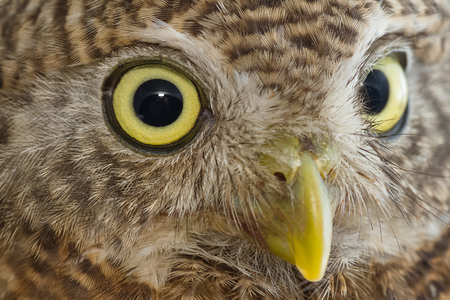 owl eye: closeup of owl eye in front of white background