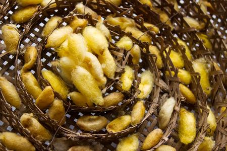gusanos: gusanos de seda nido en la cesta de bamb�